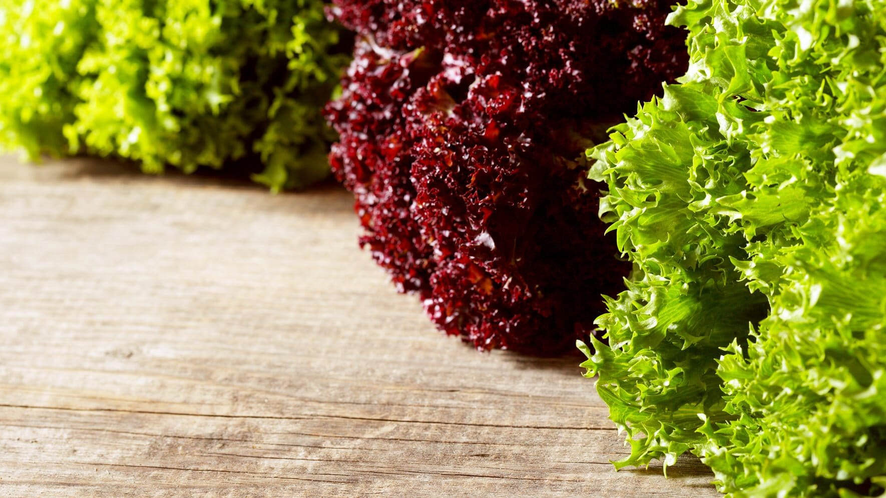 Lollo Rosso and Lollo Bianco lettuce on wooden table. Shallow depth of field.