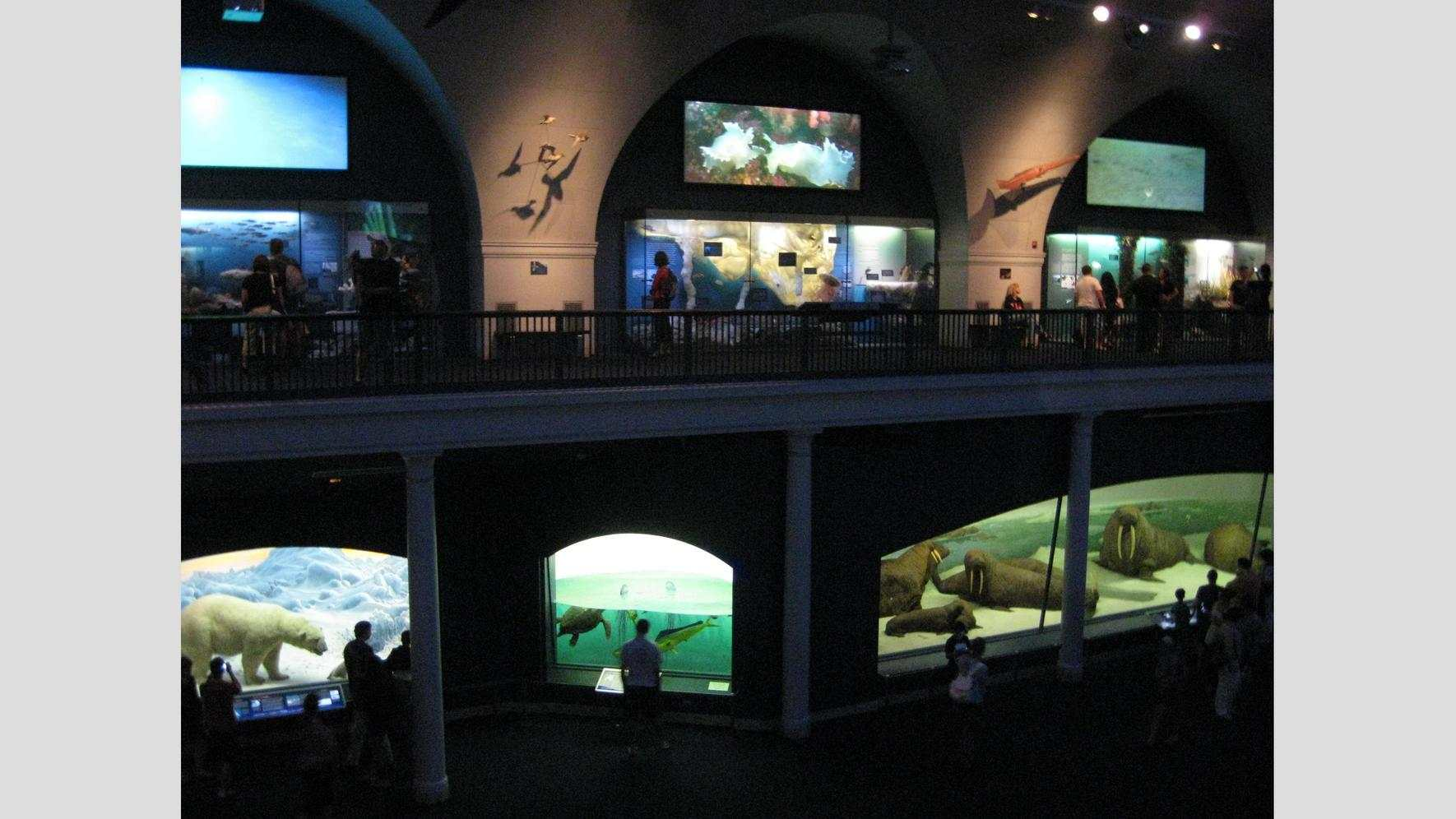 The Milstein Hall of Ocean Life, American Museum of Natural History, New York